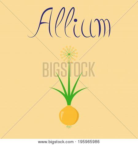 flat illustration on stylish background plant allium