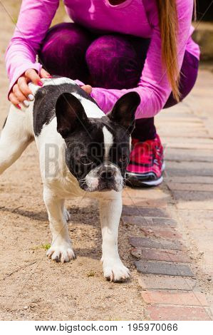 Animal lover little pets dogs fun concept. Woman wearing sport clothes playing with small cute French Bulldog in park outside