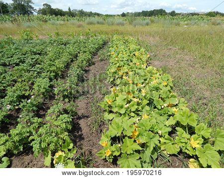 Fruits and vegetables on the field for garden