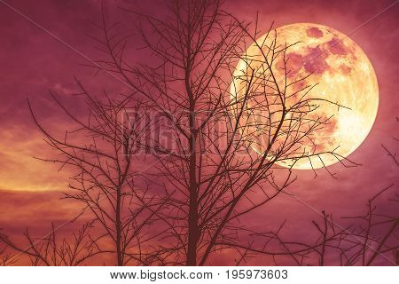 Night Landscape Of Sky With Super Moon Behind Silhouette Of Dead Tree.