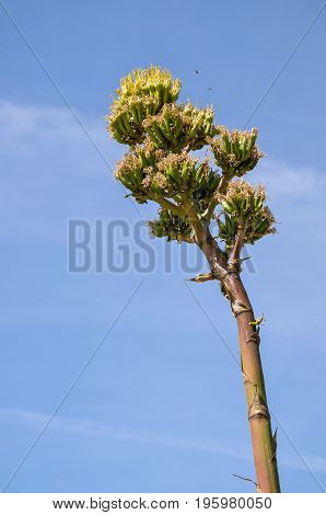 Agave Plant With Tree Growing With Flowers In Desert Landscape