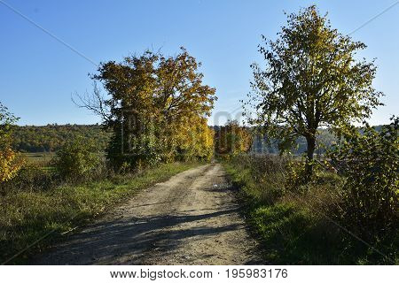 Autumn landscape. Forest sunny autumn landscape - row of autumn yellowed trees with autumn fallen leaves in the forest in sunny autumn weather.Picturesque landscape of sunny autumn forest nature