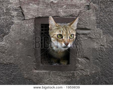 Cat In A Vent