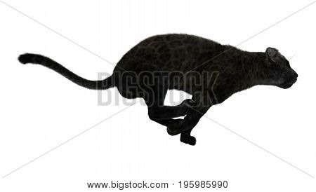 3D rendering of a black panther hunting isolated on white background