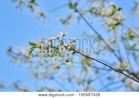 spring flowers with blue sunny sky in park
