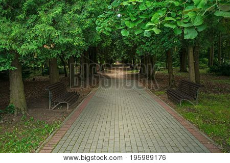Beautiful shady alley in the Park. A pedestrian path leads into the Park, benches are on both sides. Beautiful light in the depths of the alley.