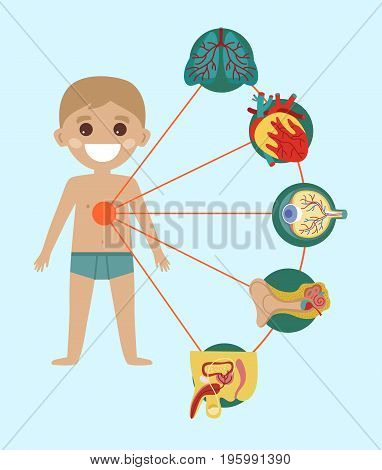 Kid health medical poster with human body anatomy. Kidney, lung, liver, heart, stomach, intestine medical vector illustration. Internal organs of boy, human body physiology systems infographics.