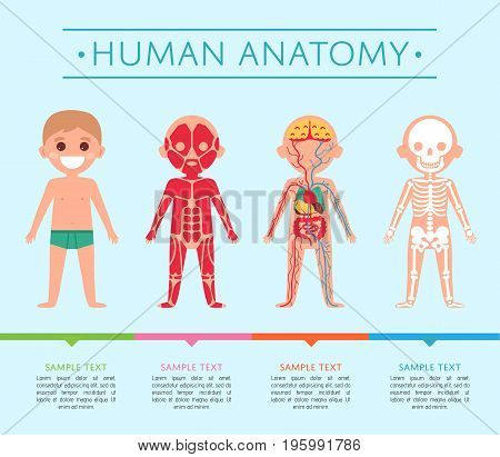 Human anatomy medical poster with child. Male skeleton, muscular, circulatory, nervous and digestive systems. Internal organs of boy, human body physiology infographic vector illustration.