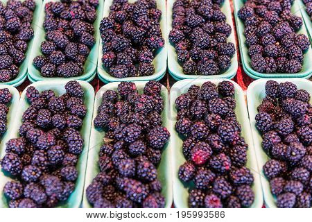 Many Blackberries On Display In Market On Trays
