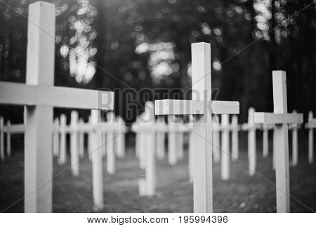 White crosses at the military Lutheran cemetery.