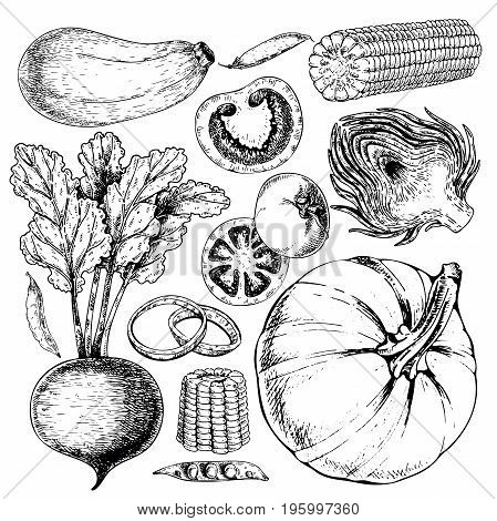 Vector hand drawn set of farm vegetables. Isolated zucchini, betroot, peas, tomato, onion, pumpkin, artichoke, corn. Engraved art. Organic sketched objects. restaurant menu grocery market store party meal