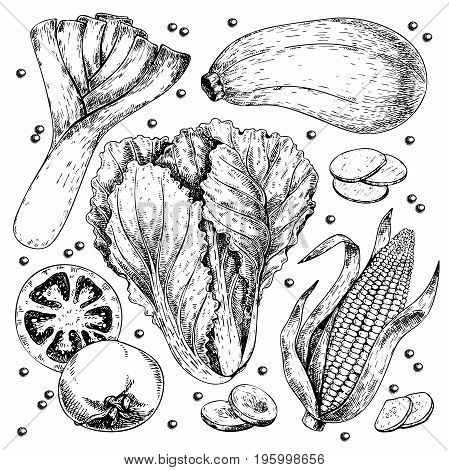 Vector hand drawn set of farm vegetables. Isolated leek. zucchini, chinese cabbage, corn, tomato, garlic. Engraved art. Organic sketched objects. restaurant, menu, grocery market store party meal