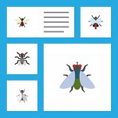 Flat Icon Fly Set Of Gnat, Bluebottle, Buzz And Other Vector Objects. Also Includes Hum, Insect, Gnat Elements. poster