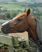 horse pony equestrian reaching talking rural countryside country outside poster