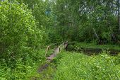 Wooden bridge leading to the Holy spring of Mary Magdalene in Kadyysky district of the Kostroma region Russia. poster