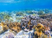 Underwater landscape with coral reef. Coral undersea photo. Seashore view. Coral closeup. Sea bottom with colorful coral ecosystem. Tropical seashore snorkeling. Marine relief landscape. Tropic lagoon poster