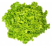 Lollo Bianco lettuce from above on white background. Lollo Bionda, summer crisp variety of Lactuca sativa. Loose-leaf lettuce. Green salad head with frilly leafs and wavy leaf margin. Closeup photo. poster