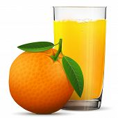 Orange juice in glass isolated on white background. Whole orange fruit with fresh squeezed juice glass. Best vector illustration about beverages fruits agriculture food gastronomy etc poster