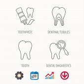 Tooth, dental diagnostics and toothpaste icons. Dentinal tubules linear sign. Calendar, Graph chart and Cogwheel signs. Download colored web icon. Vector poster