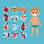 Male body anatomy medical poster with child. Kidney, lung, liver, heart, stomach, uterus, intestine cartoon characters. Internal organs of boy, human body physiology infographic vector illustration. poster