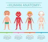 Human anatomy medical poster with child. Male skeleton, muscular, circulatory, nervous and digestive systems. Internal organs of boy, human body physiology infographic vector illustration. poster