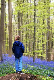 Boy in the forest. A boy stops to reflect on the beauty of The Hallerbos, also known as the Blue Forest in Belgium when once a year the forest is covered in millions of bluebells. Ecotourism, natural conservation concept.
