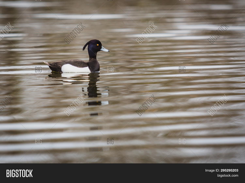 Wild Black White Water Image Photo Free Trial Bigstock