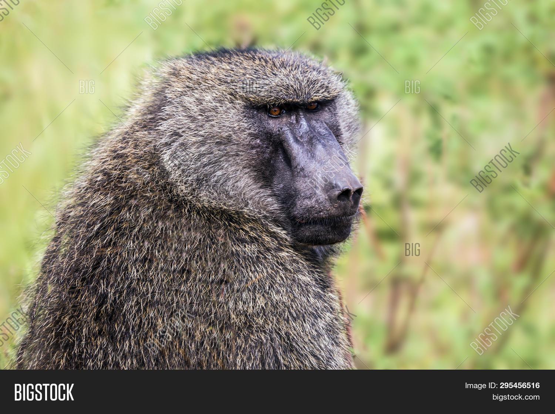 Africa, Kenya  Safari Image & Photo (Free Trial) | Bigstock