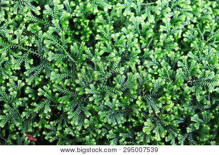 Beautiful Green Moss On The Stone, Moss Closeup, Macro. Beautiful Background Of Moss For Wallpaper.