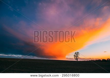 Time Lapse Time-lapse Timelapse Of Lonely Tree Growing In Spring Field At Sunset Sunrise. Morning Su