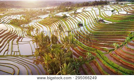 Aerial View Of Bali Rice Terraces. The Beautiful And Dramatic Rice Fields Of Jatiluwih In Southeast