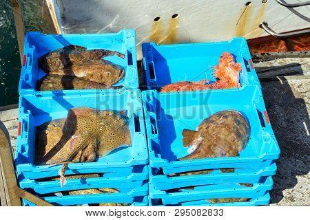 Catch Sea Redfish, Electric Stingray And Monkfish