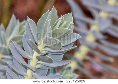 Light Green Textured Plant, Pattern, Blurred Background