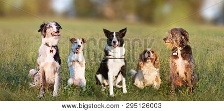 Banner Group Of Five Happy Dogs On Green Defocused Grass Background. Jack Russell, Sheepdog, Border