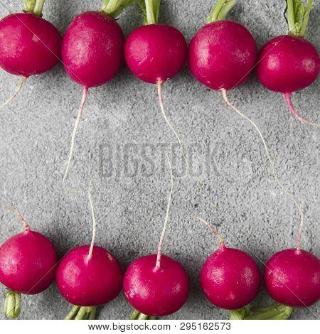 Freshly Harvested, Purple Colorful Radish On Gray Concrete Background. Growing Radish. Growing Veget