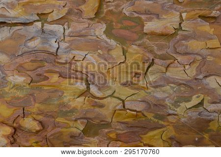 Bark closeup. Beautiful colorful wood texture of coniferous wood. Surface of exfoliating bark of pine tree close-up. Natural wood texture. Abstract background poster