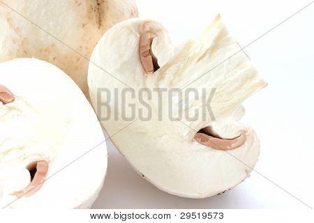 Cut raw mushrooms agarics on grey background