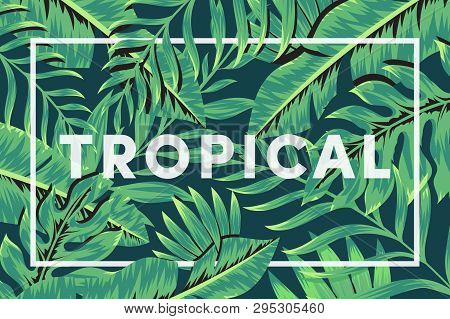 Trendy Background With Tropical Plant And Leaf. Tropic Leaves Background. Summer Exotic Floral Tropi
