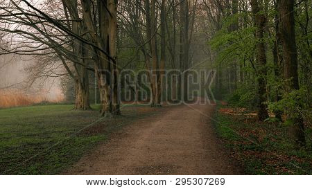 Early Morning In Amsterdamse Bos - View Of An Amsterdam Forest In Springtime. Calm And Tranquil Scen