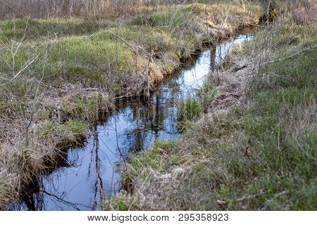 A Small Trench In The Forest. River Flowing Through The Forest.