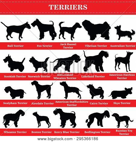 Set Of 20 Terrier Dogs. Vector Set Of Terrier Breeds Dogs Standing In Profile. Isolated Dogs Breed S
