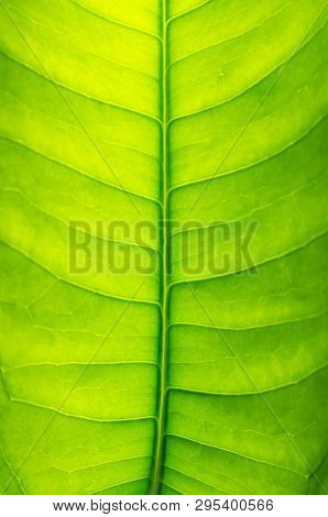 Close Up Of Abstract Green Leaf Background Texture Macro Picture