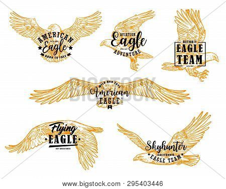 Eagle Bird Sketches With Letterings. Vector Hawk, Falcon Or American Eagle Spread Wings, Flying Bird