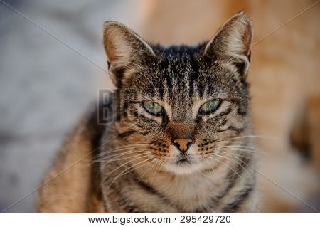 Homeless Sleepy Cat With Half-closed Eyes Outdoors