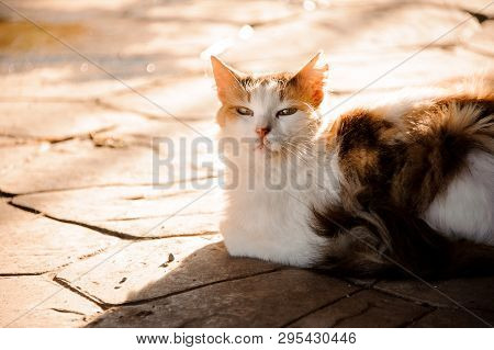 Portrait Of A Cat Laying On The Ground