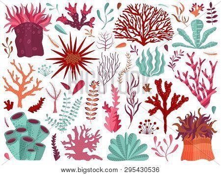 Set Of Underwater Ocean Coral Reef Plants, Corals And Anemones. Aquatic And Aquarium Seaweeds, Tropi