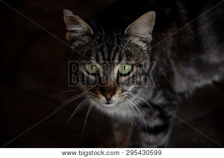 Darkened Portrait Of A Cat In Animal Shelter