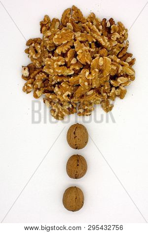 Walnut Kernels (other Names: Juglans Regia, Persian Walnut, English Walnut, Circassian Walnut). Isol