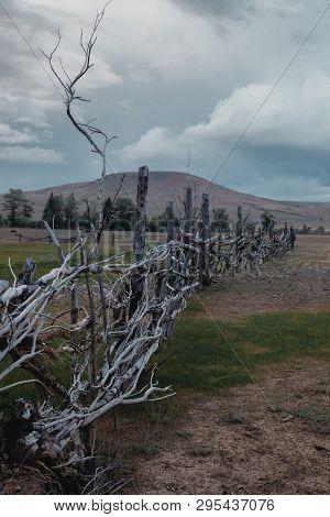 The Fence Of Branches Stands Against The Mountains. Atmospheric Fence