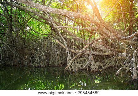 Sunny day in mangrove forest, Sri Lanka, Asia